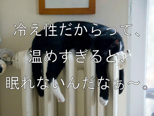 冷え性の猫