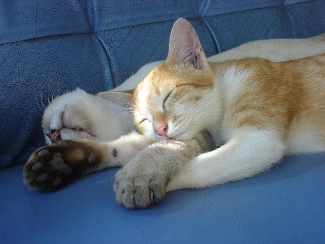 寝返りする猫