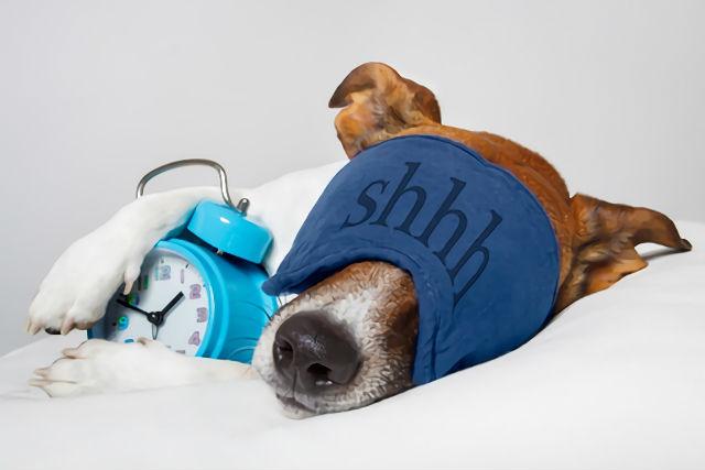 アイマスクを着けて眠る犬